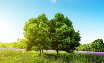 L'importance de l'entretien des arbres pour l'homme et la nature